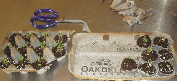 Egg Carton Seed Pods