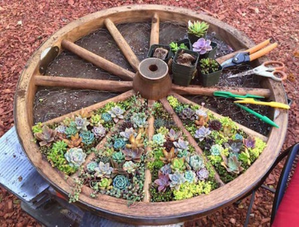 15 easy diy backyard succulent garden ideas style motivation 15 easy diy backyard succulent garden ideas sisterspd
