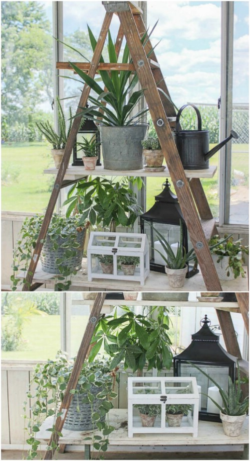 Indoor/Outdoor Plant Display