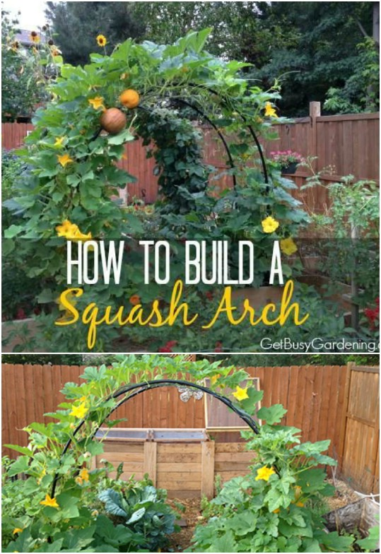 Trellis Garden Ideas Part - 43: Beautiful Arched Trellis