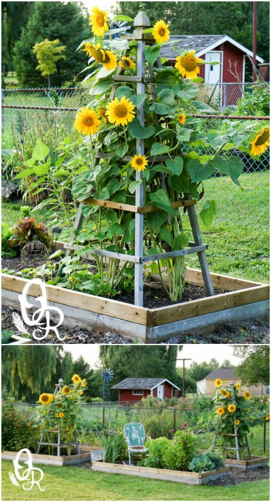Captivating DIY Obelisk Garden Trellis