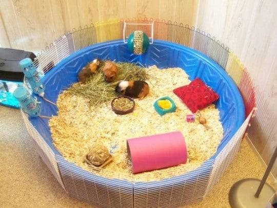 DIY Guinea Pig Cage