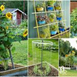 20 Easy DIY Trellis Ideas To Add Charm and Functionality To Your Garden