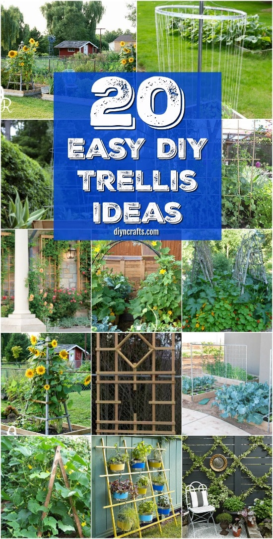 20 easy diy trellis ideas to add charm and functionality to your