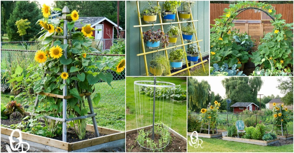 Trellis Gardening Ideas Part - 41: 20 Easy DIY Trellis Ideas To Add Charm And Functionality To Your Garden -  DIY U0026 Crafts