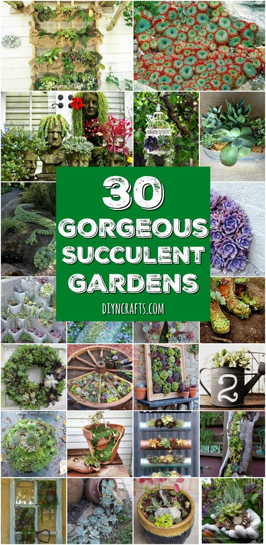 30 Captivating Backyard Succulent Gardens You Can Easily DIY   Curated And  Created By DIYnCrafts.