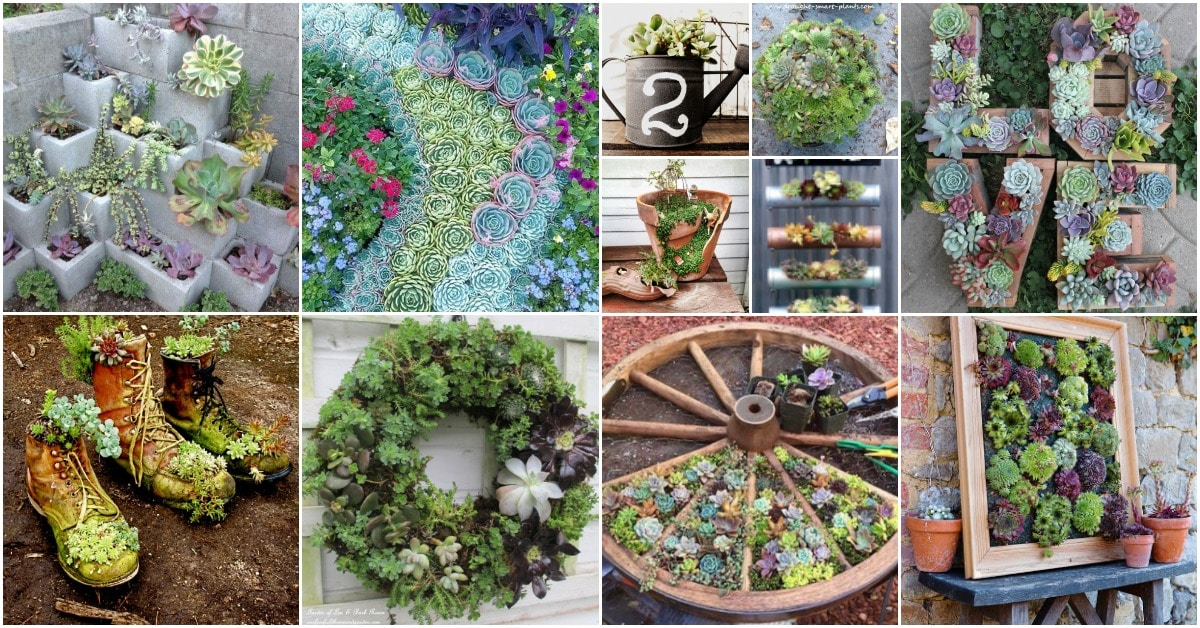 30 Captivating Backyard Succulent Gardens You Can Easily