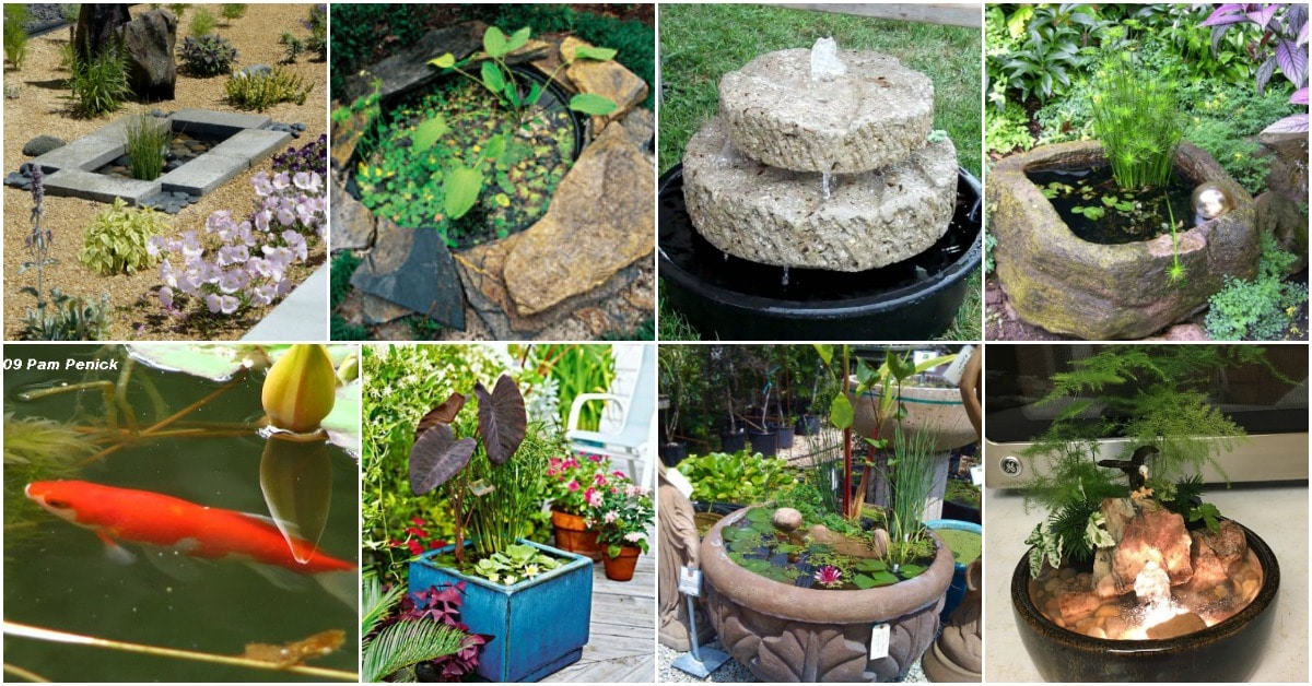 20 Charming And Cheap Mini Water Garden Ideas For Your ...
