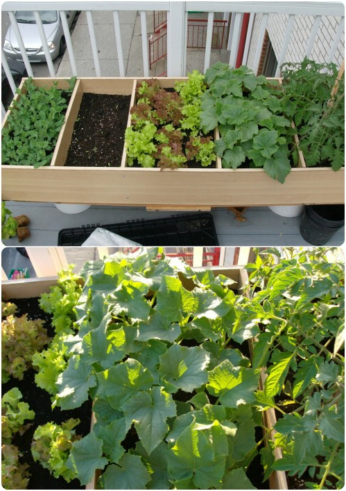 DIY Bookcase Container Garden