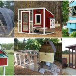 20 Free DIY Chicken Coop Plans You Can Build This Weekend