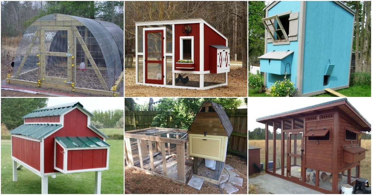 Captivating chicken houses plans pictures best for Plans for a chicken coop for 12 chickens