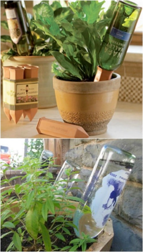 DIY Recycled Bottle Watering Globes