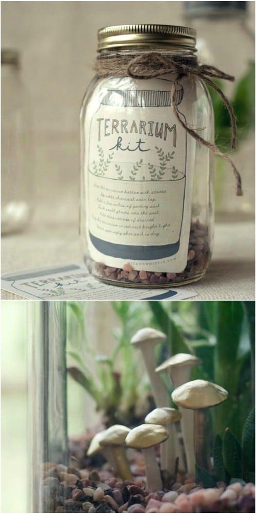 DIY Terrarium Kit For Gardeners