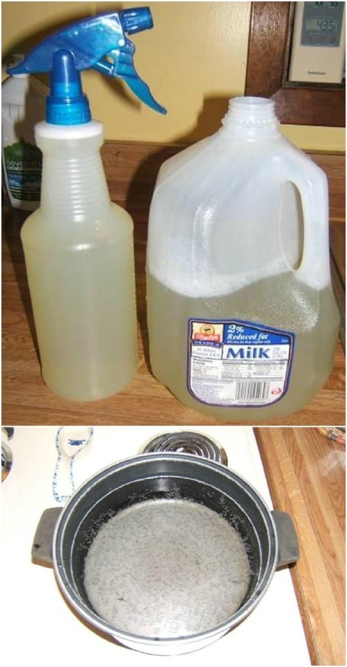 Homemade Veggie Soup Insecticide