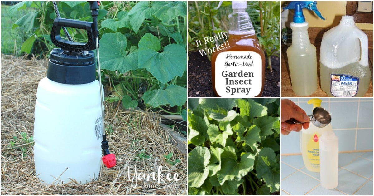 10 Homemade Insecticides That Keep Your Garden Pest Free Naturally Diy Crafts