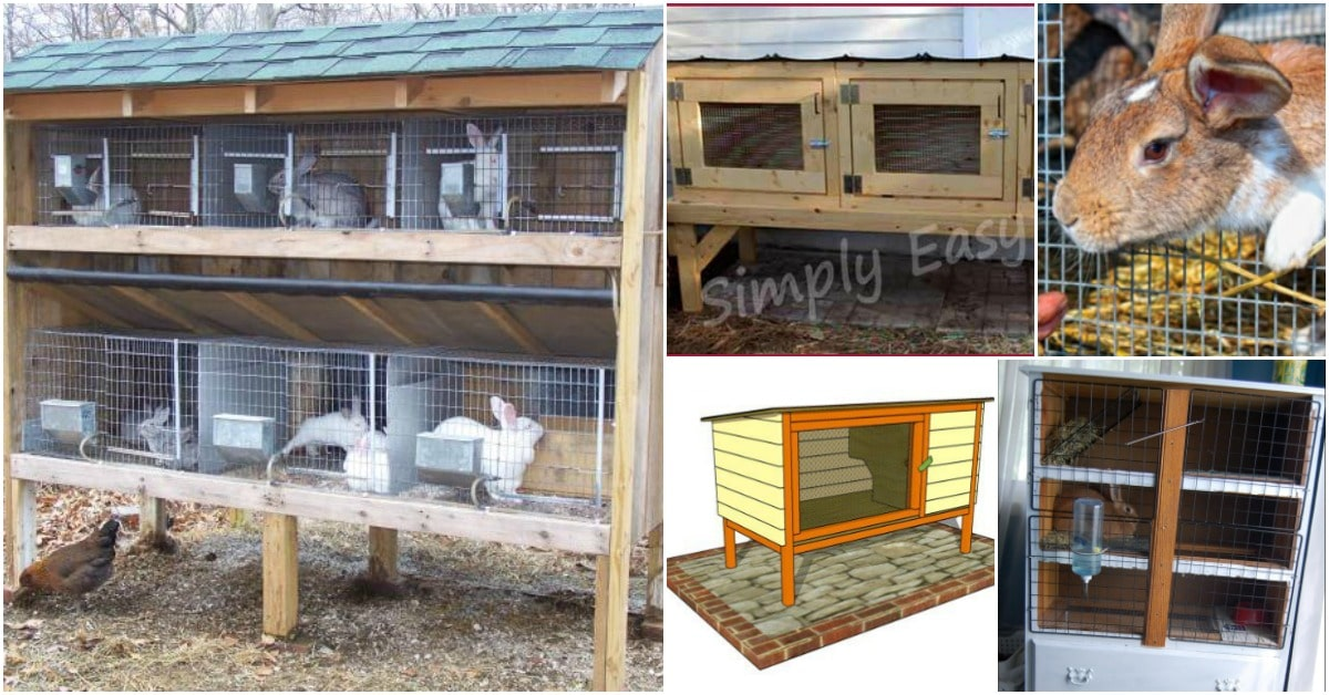 10 free diy rabbit hutch plans that make raising bunnies easy