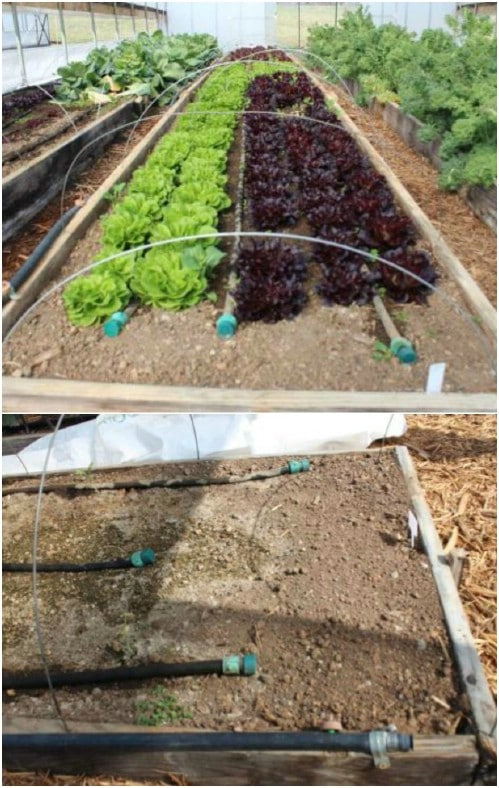 Dual System DIY Irrigation
