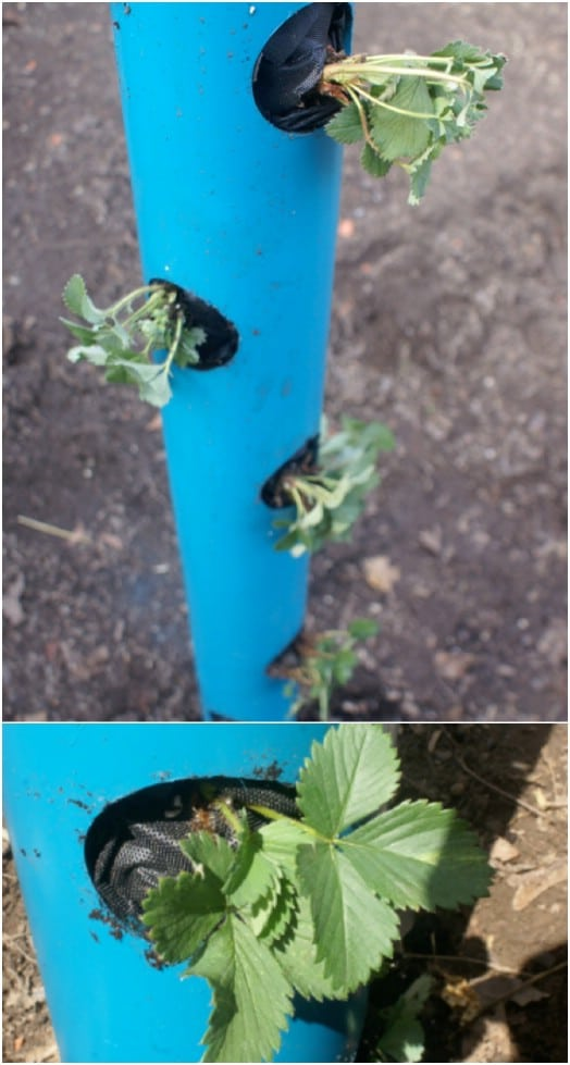 DIY PVC Tube Planter