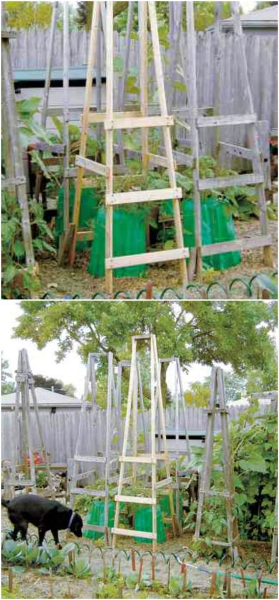 DIY Folding Ladder Tomato Cages