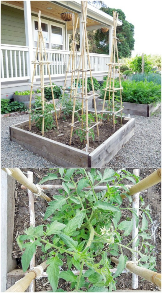 14 Great DIY Garden Plant Supports and Ideas