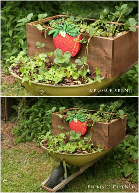 DIY Rolling Strawberry Planter