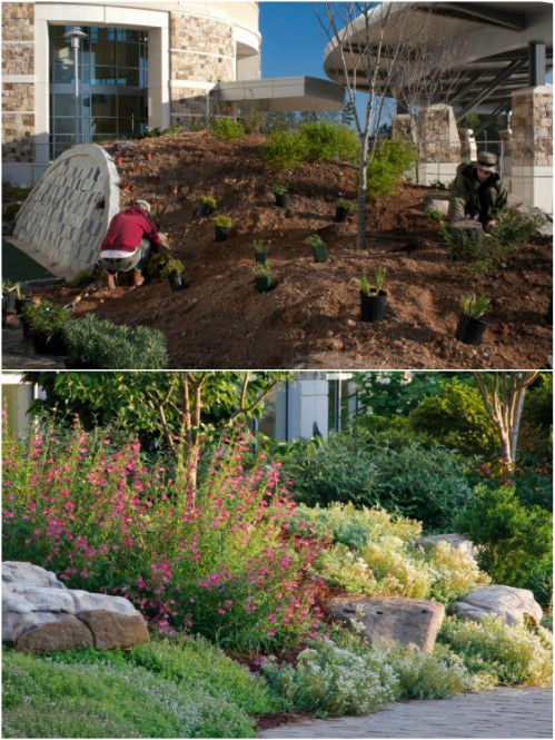 best diy rock garden ideas - Rock Garden Ideas